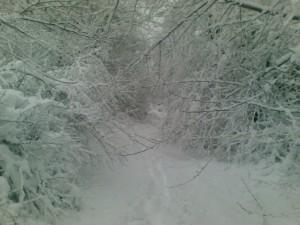 Зимняя сказка по дороге на работу